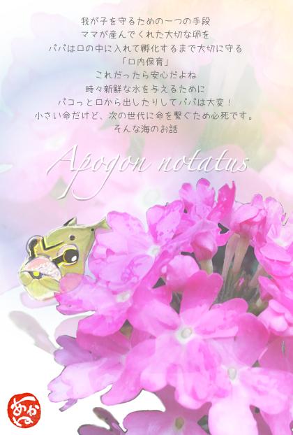 150726クロホシイシモチとピンクのお花.jpg