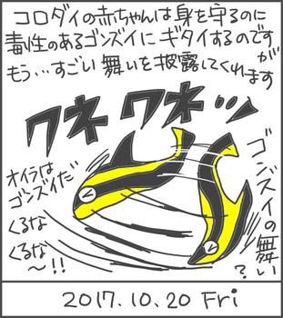 171020コロダイ幼魚.jpg