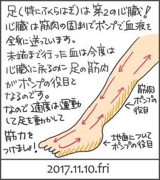 171110心臓と足の筋肉_edited-1.jpg