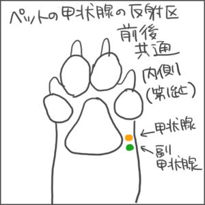 170427甲状腺04_edited-1.jpg