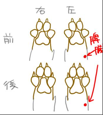 犬の脾臓_edited-1.jpg