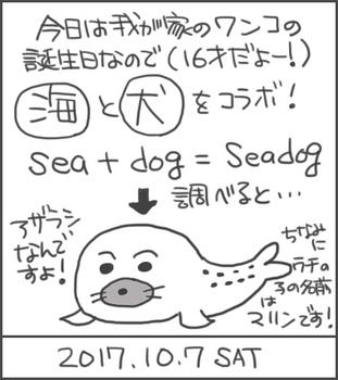 171007seadog_edited-1.jpg