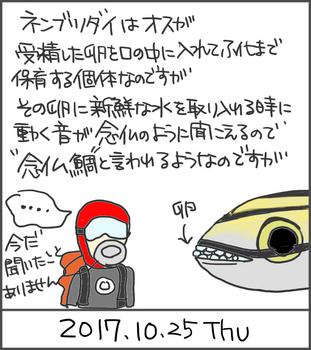 171025ネンブツダイ.jpg